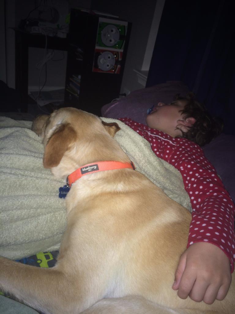 Boyanddoggiesleep